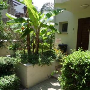 garden - 2