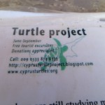 turtles - 2